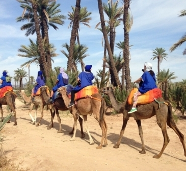 marrakech camel ride